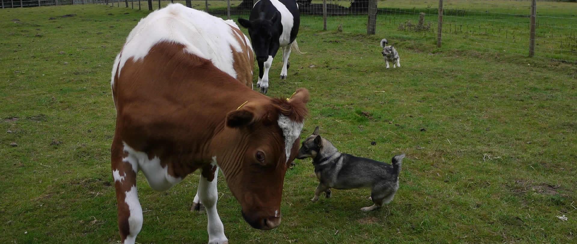 herding2